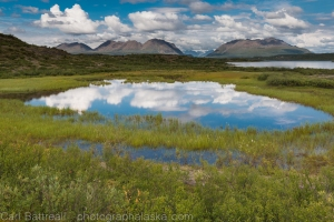 Pond near Lower Tangle lake, Amphitheater Mountains, Eastern Alaska Range