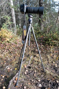 It was a windy day and the ground wet and spongy. I used my tent peg system to help secure the tripod to the ground. I used the telephotos tripod collar to help center the weight of the camera over the middle of the tripod.