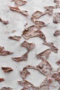 Birch Bark Detail#1