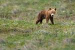 Tiny spring cub.