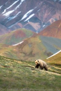 Denali has some really nice backgrounds for wildlife photography.