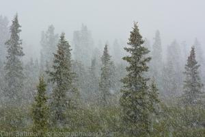 June blizzard