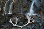 Caribou antlers and waterfalls, Clearwater Mountains
