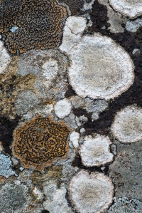 Lichen, Clearwater Mountains
