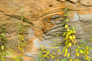 The sandstone is so soft that this willow, blowing in the wind, creates grooves in it.
